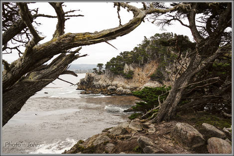 Point Lobos - Sony RX1