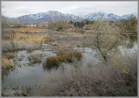 Salt Lake City Marshland