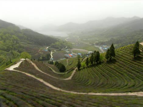 Green tea farm - toy filter