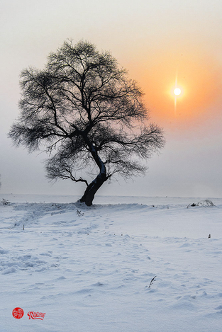 Solitude tree & setting sun