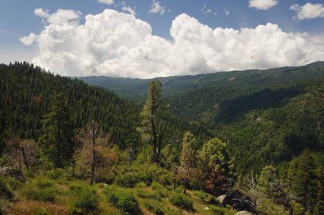 Yosemite _JRE1029