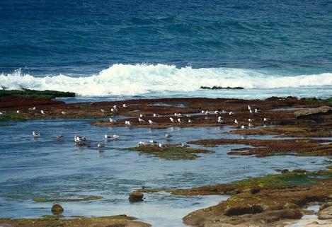 La Jolla Gulls