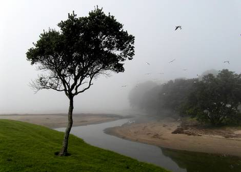 Tree and the mist