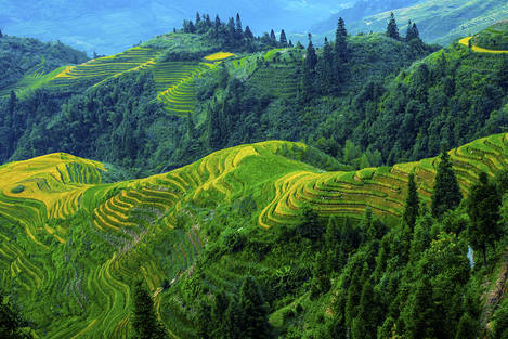 Rice terrace at Longji,Guilin