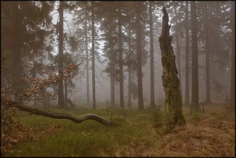 Fog (last)