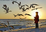 001_A_325-c_D80-2_18-135dx_Iso125_Tpod_28Jan07_Sunset_Gulls_sgc511.jpg
