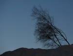 246060bending_tree.jpg