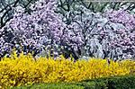 3_B_660_D90_VR55_Iso320_19Mar12_Wash-DC_Trees_sgc699.jpg