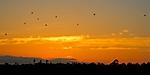 Balloons_in_the_Sunset_DSC_9205.jpg