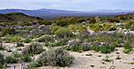 Desert_Lavender_JRD3703_web1000.jpg
