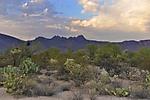 Desert_Scene_web1000_JRE6079.jpg