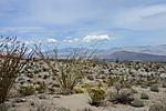 Ocotillo_Cactus_ARC_4249.jpg