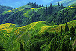 riceterrace1.jpg