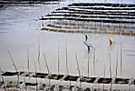 seaweedworkers2.jpg