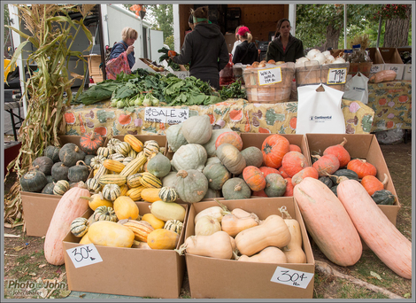 Squash Display - Farmers Market