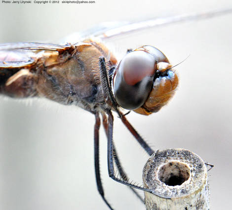 One close-up of a dragonfly