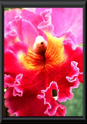 orchid art 1