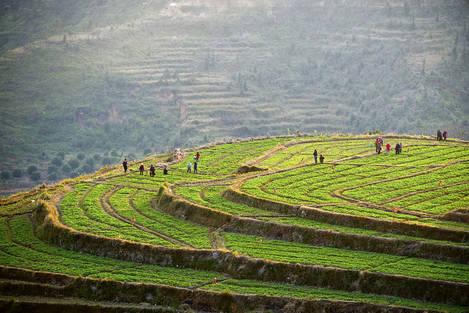 Vegetable terrace