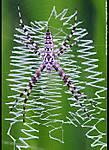 001_K_205_D700_200-mic_Iso1000_Tpod_14Jun09_Spider_sgc690.jpg