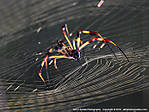 00_K_185_Adj_D80-2_1000_Iso400_Tpod_30Aug07_Spider_sgc691.jpg