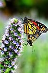 1-Butterflies.jpg