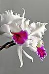 1-Orchids.jpg