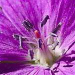 20100618_Flowers_ParadiseUT_Macro_001_sm.jpg