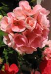 237540flowers1.jpg