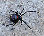 3a_V_052_D5000_VR85-mic_Iso1000_23Oct12_Yard_Spider_sgc694.jpg