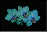 IMG_5770_Orchids.png