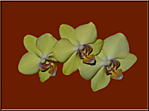 Orchids_2.png