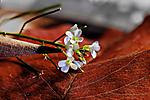 Tiny_Wild_Flowers.jpg