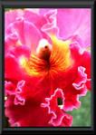 orchid_art_3.jpg