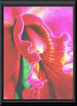 orchid_art_5.jpg
