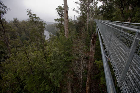 Air Walk Tahune Forest