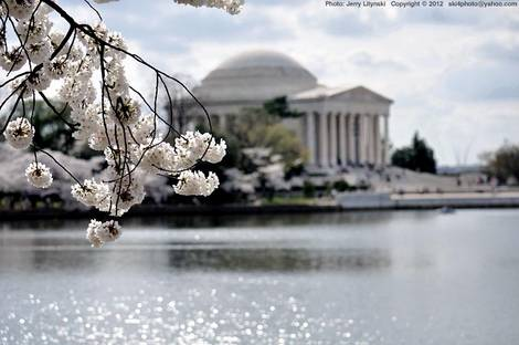 It's Cherry Blossom time!