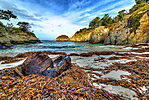 Point_Lobos_State_-2.jpg