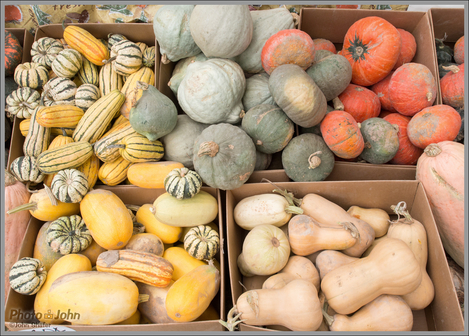 Fall Scene - Squash & Gourds
