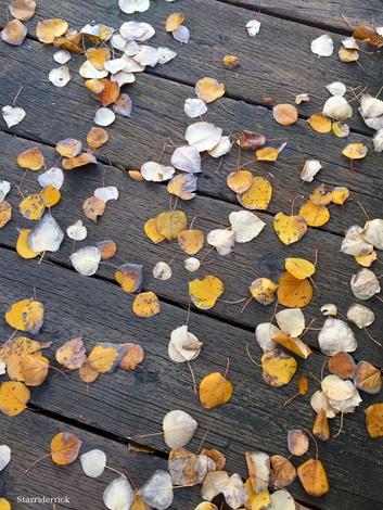January....fall