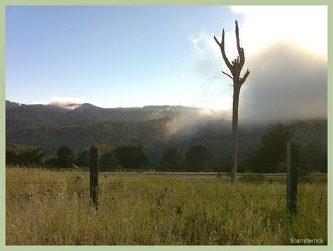 Seasonal Fog Flare