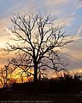 002_E_014_D700_VR18-200_Iso320_28Jan10_Mobile_Tree_sgc695.jpg
