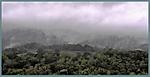 A_NorCal_Rain_Forest_125x.jpg
