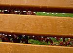 Autumn-bench.jpg