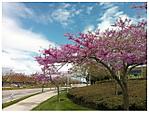 Spring_has_sprung1.jpg