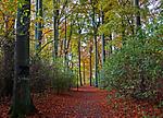 autumn21.jpg