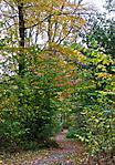 autumn999.jpg