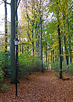 autumn_1234_redigerad-1.jpg