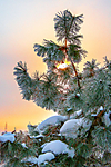 snowcoveftree_2.jpg
