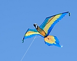 Parrot_Kite_web_1000_ARC_1842.jpg