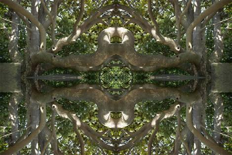 Twistin' Trees